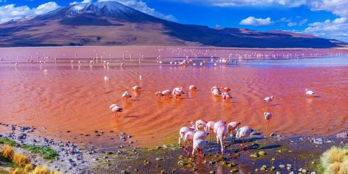 Pink flamingos in the striking Laguna Colorada | Bolivia | On The Go Tours