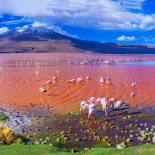 Pink flamingos in the striking Laguna Colorada | Bolivia | On The Go Tours