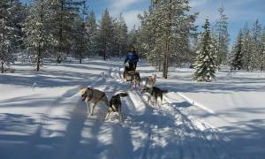 Lapland and Husky Highlights - Lapland - On The Go Tours
