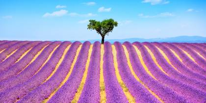 Lavendar fields of Provence - best places menu image - On The Go Tours