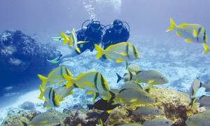 Learn-To-Dive-Ex-Sharm-Itinerary-Main-Red-Sea-Diving-Egypt
