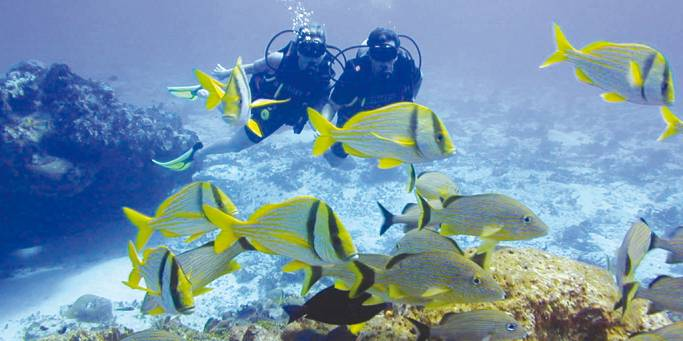 Diving in the Red Sea | Egypt