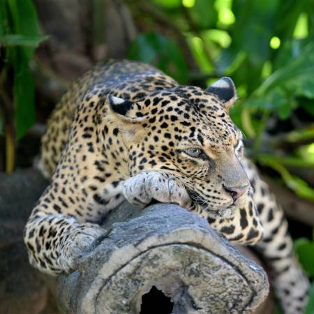 Leopard in Yala - Sri Lanka Tours - On The Go Tours