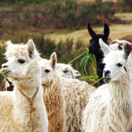 Lima-Llama-Land-Itinerary-1-Peru-&-Bolivia-South-America