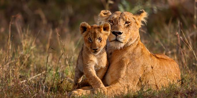 Lioness and Cub | Safari | Africa