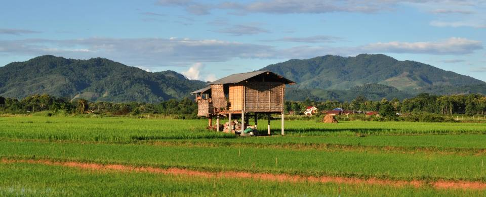 Rice paddies with a wooden shack on stilts in the middle and mountains in the background in Luang Na