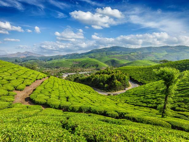Rolling hills and tea gardens of Munnar