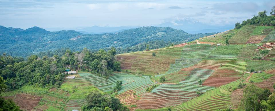 Impressive views of the terraces that characterise the district of Mae Rim in northern Thailand