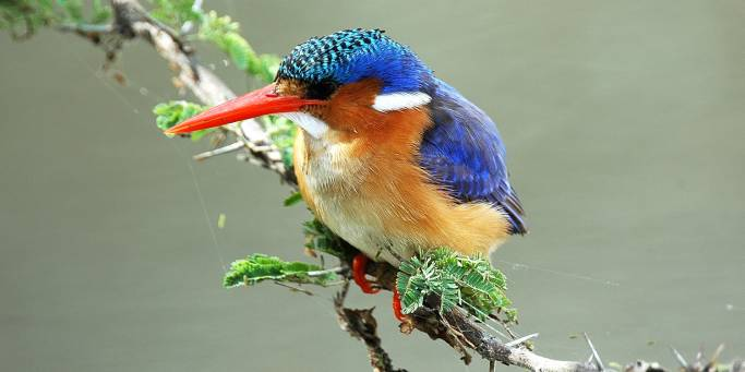 Malachite Kingfisher in Kruger - South Africa - On The Go Tours