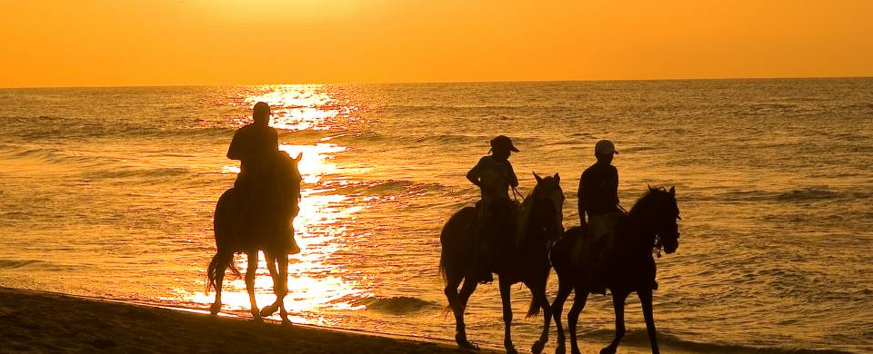 Sihouettes of horses riding along the beach at sunset in Mancora