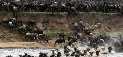 Mara River - Kenya - Africa Safaris - On The Go Tours