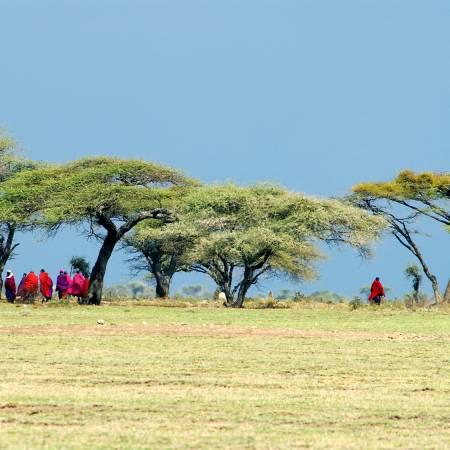 Masai-Under-Acacia-Trees-Africa