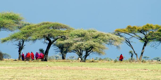 Masai men under Acacia trees | Kenya