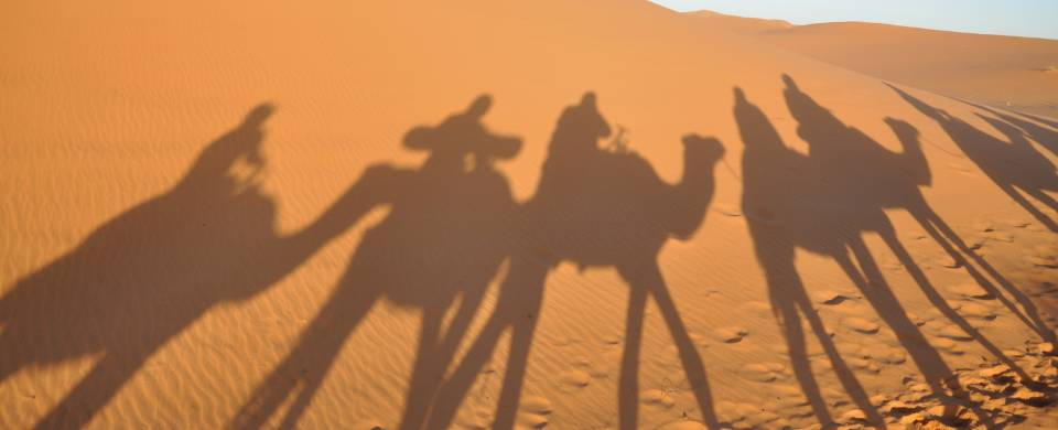 Shadows of camels on the sand in Merzouga