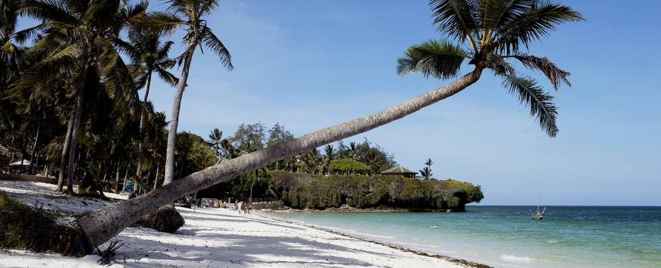 Palm tree leaning horizontally white sand of Diani Beach in Mombasa