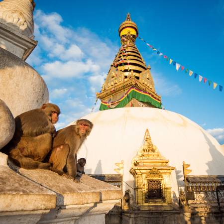 Monkeys sitting in front of Boudhanath Stupa in Kathamandu - Nepal Tours - On The Go Tours