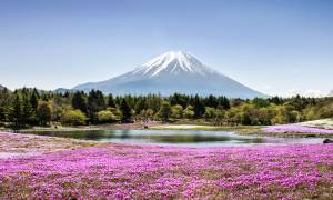 Mount Fuji with phlox moss and lake in foreground - Japan Tours - On The Go Tours