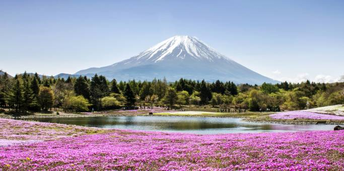 Mount FUji with phlox moss and reflective lake in the foreground | Japan