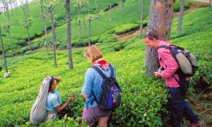 Munnar-Tea-Estate-Bolt-Ons-India