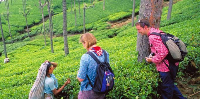 Tea plantatino | Munnar | India