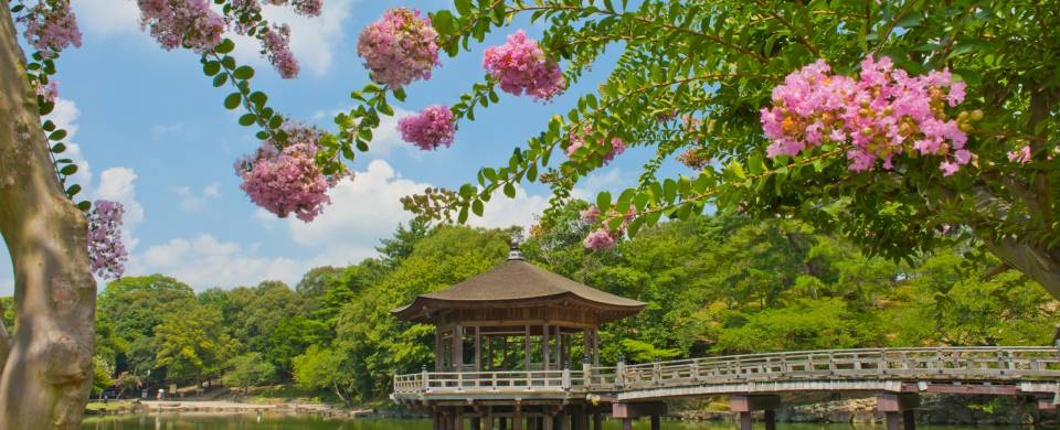 Wooden gazebo on a lake surrounded by blossoms in the city of Nara