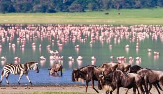Flamingoes | Ngorongoro Crater | Tanzania