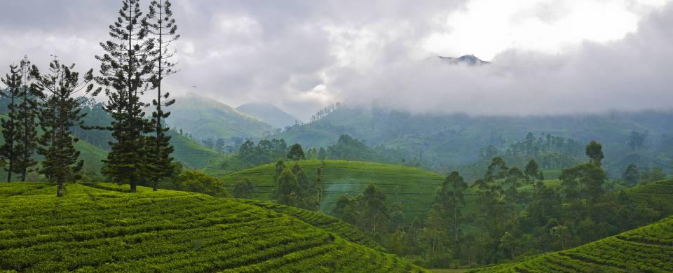 The rolling tea plantation hills of Nuwara Eliya