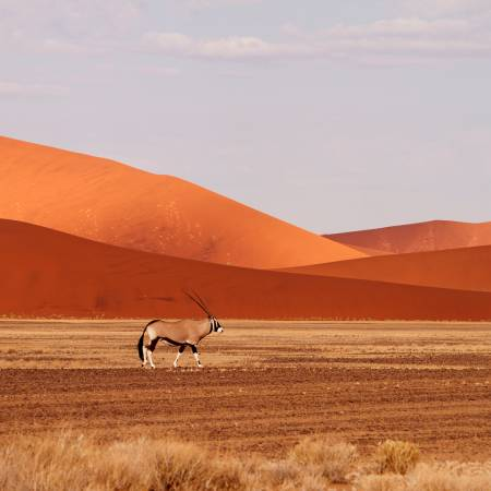Oryx in Namibia- Africa Overland Safaris - On The Go Tours