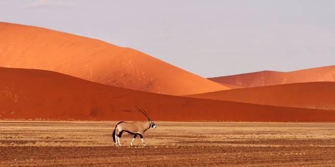 Oryx in Sossuslvlei | Namibia
