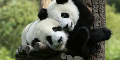 Pandas-Useful-Info-China