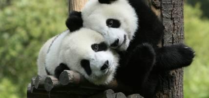 Pandas-Useful-Info-China