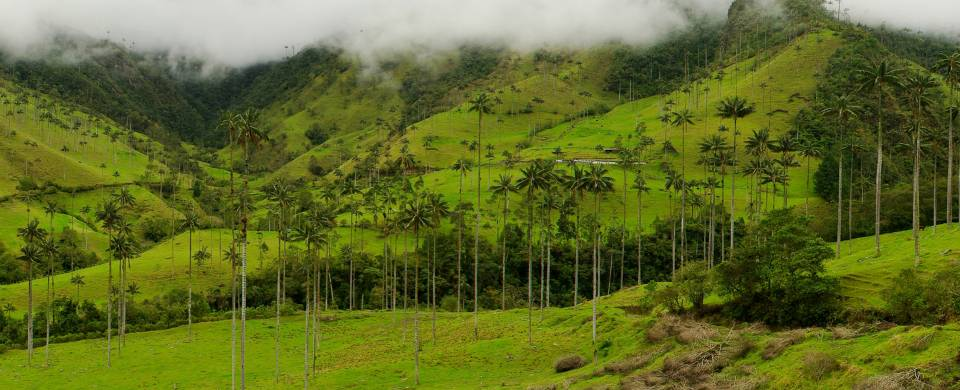 The verdant hills and wax palms of the coffee region that surrounds the city of Pereira