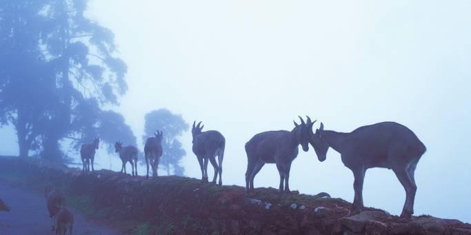 Wildlife spotting | Ranthambhore National Park | India