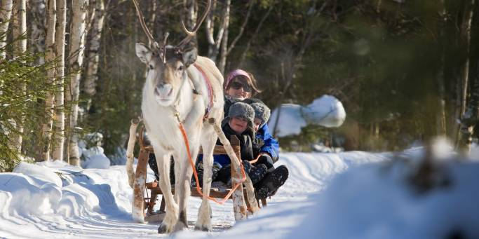 Reindeer Sleigh Ride 4 - Safartica