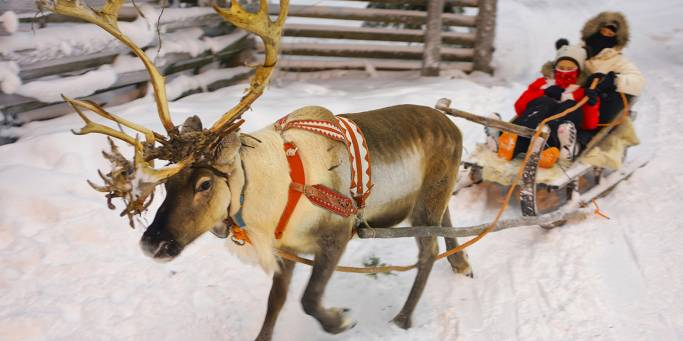 Reindeer safari in Lapland | Finland