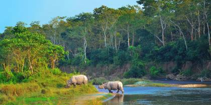 Rhino in Chitwan NP - Nepal - On The Go Tours