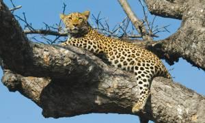 Safari-Safari-Itinerary-Main-Classic-Safaris-Africa