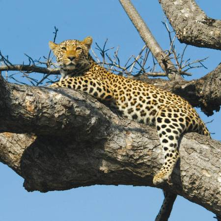 Safari-Safari-Itinerary-Main-Classic-Safaris-Africa