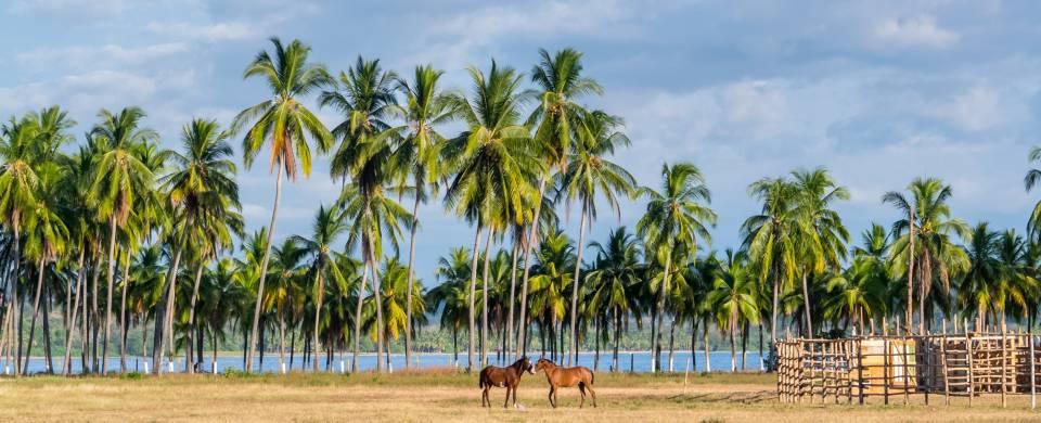 Horses standing on the stunning white sand Samara Beach in Costa Rica