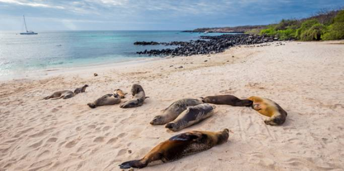 Sea lions lounging on the sands of San Cristobal island in the Galapagos