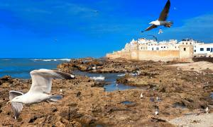 Seagulls flying over Essaouira - Morocco Tours - On The Go Tours