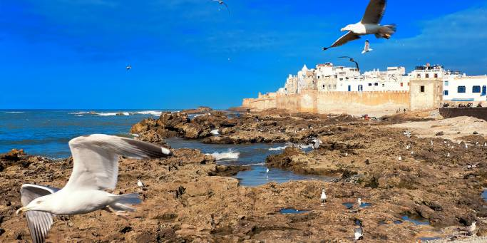 Seagulls flying over Essaouira | Morocco