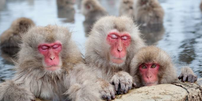 Snow Monkeys in Nagano | Japan