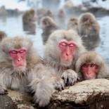 Snow Monkeys in Nagano | Japan