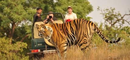 Spotting Tigers TG menu image