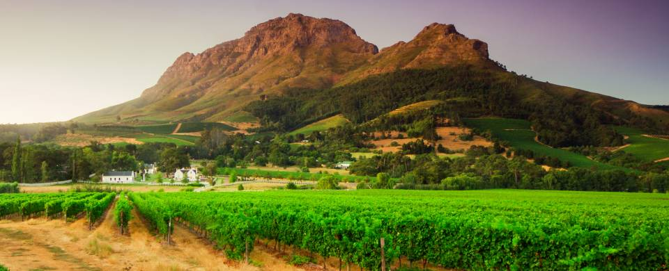 Grassy plains with mountain in the background in Stellenbosch