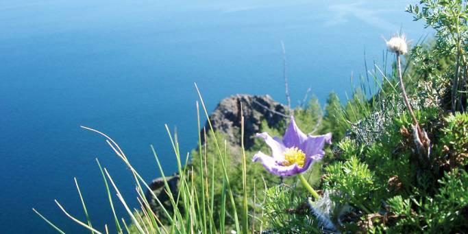 Flowers on Peschanoe Lake   Trans-siberian Railway    Russia