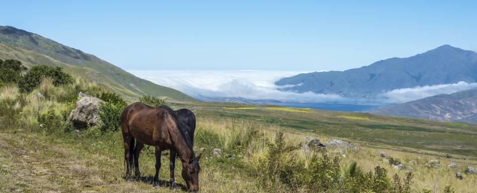 Horse grazing in the vivid grass in the Tafi del Valle