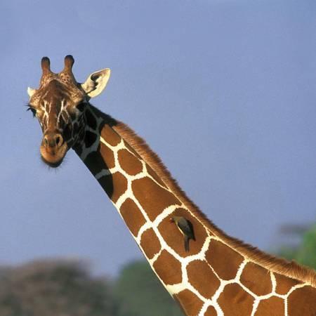 Tanzania-Lodge-Safari-Itinerary-Main-Lodge-And-Hotel-Safaris-Africa