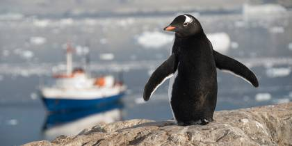The Ushuaia and a penguin - Antarctica Expedition Cruises - On The Go Tours